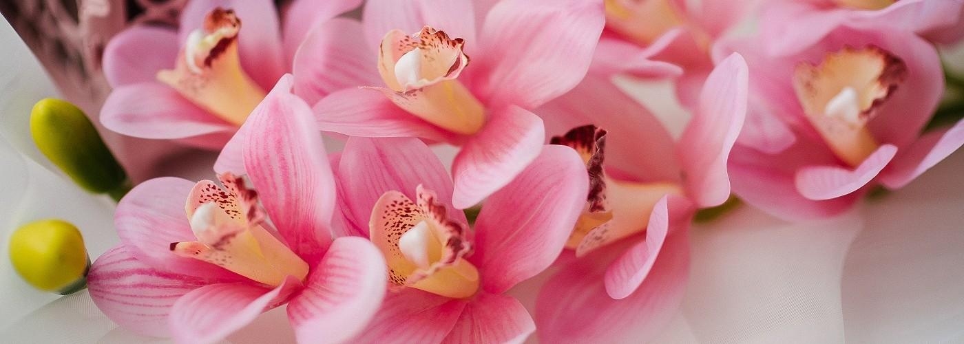 Цветы Natural Touch орхидея