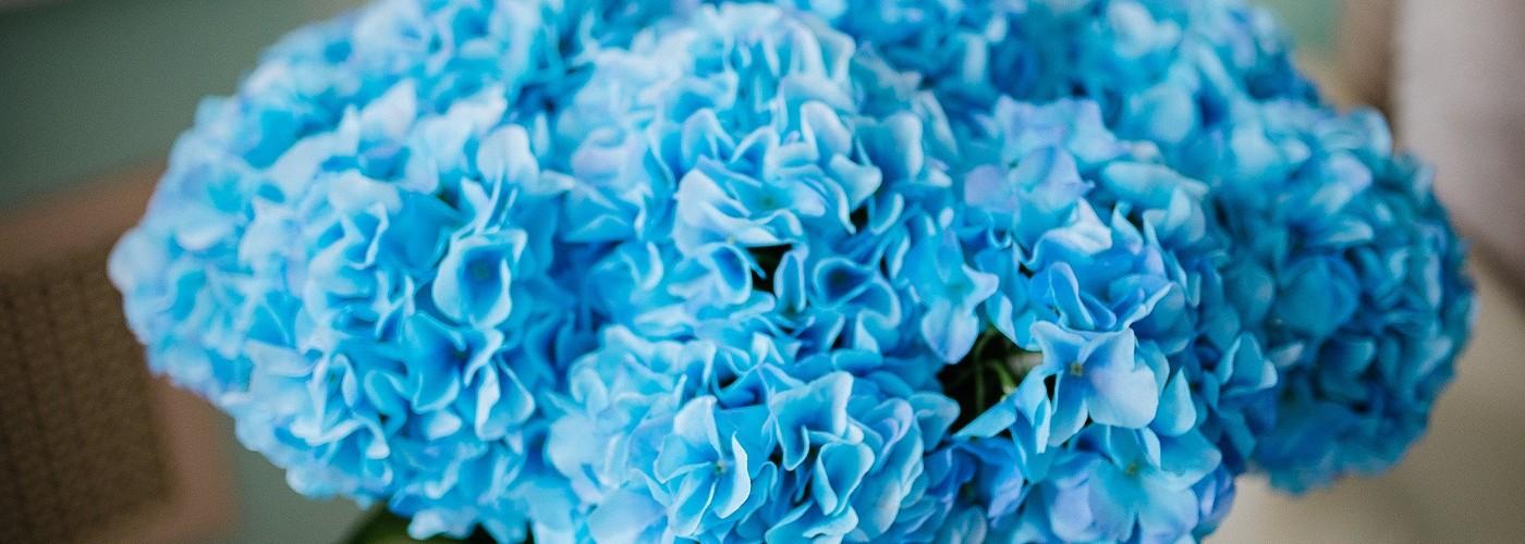 Цветы Natural Touch гортензия