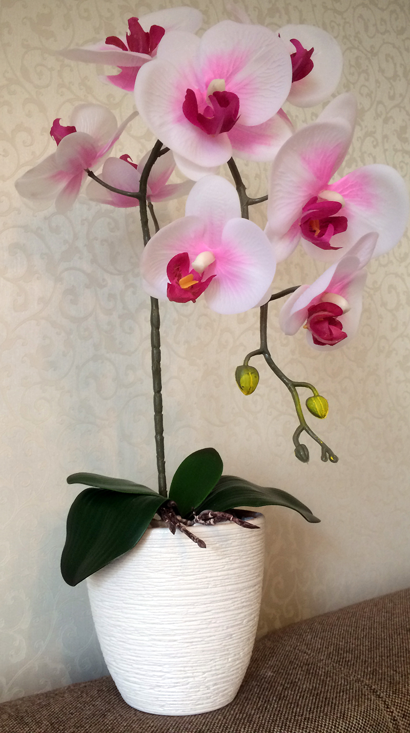 Фото цветов орхидеи в горшке
