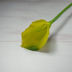 калла зеленая