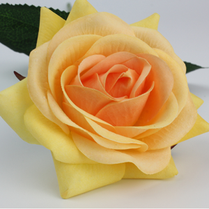 роза чайная персиковая