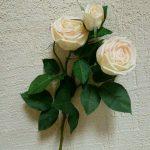 Роза пионовидная 2+1/молочная
